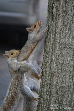 22 Squirrels That Are So Animated You Would Think They Were Human - - Eichhörnchen - Tiere