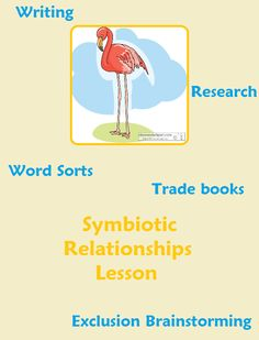Symbiotic Relationships Lesson