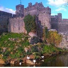 Cahir castle is looking spectacular in this photo by @ginamurphy2016 isn't it?