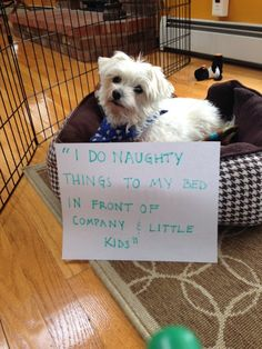 """I do naughty things to my bed in front of company and little kids."" ~ Dog Shaming shame - exhibitionist"