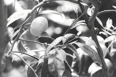 Garden Tool Decor Hooks garden tool shed dreams.Garden Tool Shed Inspiration. Garden Mesh, Td Garden, Garden Tool Shed, Garden Tool Storage, Garden Planters, Rockery Garden, Greenhouse Gardening, Garden Club, Green Garden