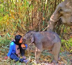 Elephants - she loves them beyond words, and that's why she founded a sanctuary. <3