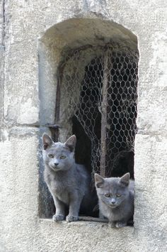 Alley cats in #France  #www.frenchriviera.com