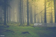 Stock Photo : Sunrise light in autumn fog forest