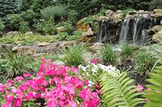 Water Feature Landscaping: Bright plantings with green ground cover and water plants, along with river stone gravel, contribute to the natural look and serenity of this setting. Water Collection System, Pond Maintenance, Pond Water Features, Pond Waterfall, Landscaping With Rocks, Landscaping Ideas, Backyard Ideas, Waterfall Landscaping, Outdoor Ideas