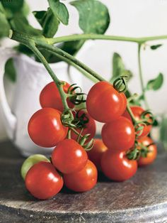 Large Red Cherry Tomatoes  'Large Red Cherry' typifies the ubiquitous round tomato of American salad fare.