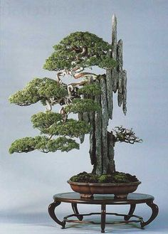 Growing bonsai from their seeds is essentially growing a tree from its seed. Get tips and guidelines on how to grow your first bonsai from its seed phase. Ikebana, Garden Terrarium, Bonsai Garden, Juniper Bonsai, Pot Jardin, Indoor Bonsai, Miniature Trees, Arte Floral, Growing Tree