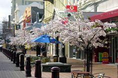 Spring in Esk Street, Invercargill, New Zealand by PhillipC, via Flickr