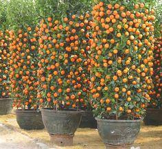 """3,985 """"Μου αρέσει!"""", 30 σχόλια - Narong Sengdonprai (@cute_violet) στο Instagram: """"🍊🍊🍊 Yummy Oranges 🍊🍊🍊"""""""