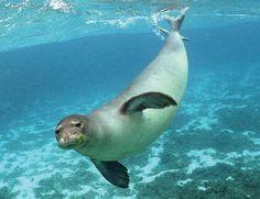focas marinas -
