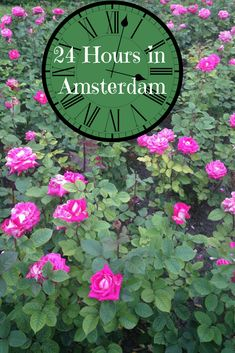 Here is a perfect travel itinerary for How to Have A Perfect 24 Hours in Amsterdam, The Netherlands Featuring Vondelpark including all the travel tips and travel photos a person could need! You'll eat Indonesian food, see Van Gogh, and drink some fine Dutch beer!