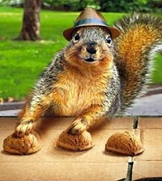 Funny-Squirrel-Pictures-2                                                                                                                                                                                 More