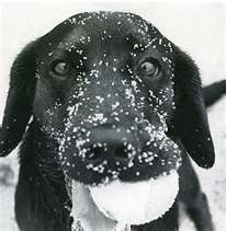 My Katie loves to play in the snow just like this!