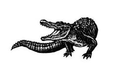 Another Alligator Tattoo for me :)