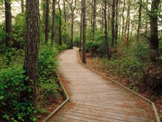 Assateague Island - forest trail