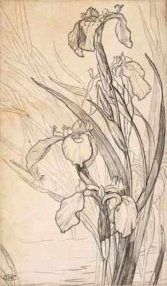 """Résultat de recherche d'images pour """"aquarelles marianne broome"""""""