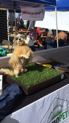 Grass, Dogs, Animals, Animais, Animales, Animaux, Pet Dogs, Grasses, Doggies
