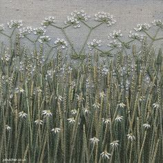 Grass Meadow with Cow Parsley by Jo Butcher