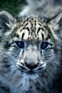 Aww it has such pretty eyes!!!!!!