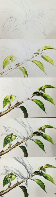 건국대 리빙디자인과 기출 소재 Botanical Drawings, Botanical Art, Botanical Illustration, Watercolor Illustration, Watercolor Paintings, Jr Art, Contour Drawing, Nature Drawing, Leaf Art