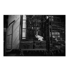 https://flic.kr/p/wm64bo | Mayu August 2015  #cat #smallcats #blackandwhitephotography