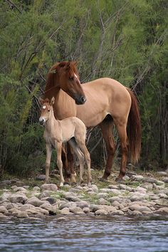 Find images and videos about horses, cute animals and baby animals on We Heart It - the app to get lost in what you love. All The Pretty Horses, Beautiful Horses, Animals Beautiful, Animals And Pets, Baby Animals, Cute Animals, Baby Horses, Wild Horses, Draft Horses