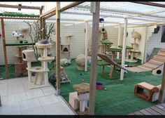 New ferret cage i want to do this some day and rescue ferrets again wooden outdoor cat play structure, best 25 outside cat enclosure ideas diy toys