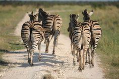 Safari, Week End, Photos Du, Photograph, Eyes, Animals, Photography, Animales, Animaux