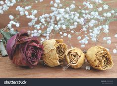 Dry Roses With Baby'S Breath (Gypsophilia Paniculata) And Wood Background Stock Photo 263652026 : Shutterstock