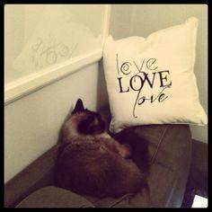 Nawet kot przy podusi od www.mymiloo.pl odpoczywa:)