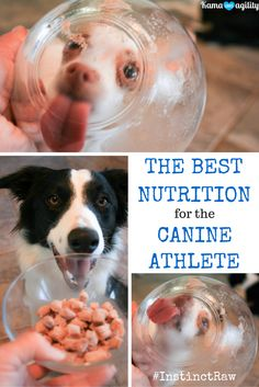 How to enhance the performance of a canine athlete. #InstinctRaw