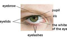 The Five Senses:  Sense of Sight