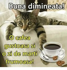 Good Morning, Humor, Meme, Tuesday, Google, Motivational Quotes, Pictures, Kitty, Buen Dia