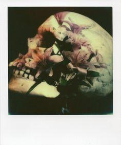 "Saatchi Online Artist: Andrew Millar; Polaroid 2013 Photography ""Blossoms & Bones"""