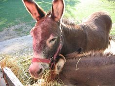 Good Morning :) 'When a donkey comes to you, you give him cabbages...' Read the full story below.  http://www.sufi-stories.com/the-meaning