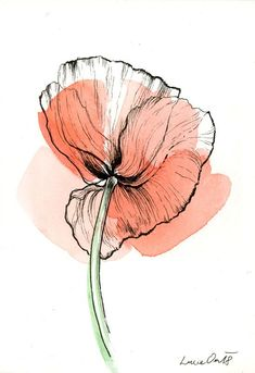 garden care Wolf + Poppy + Technique: + Combined, + Watercolor + and + Inco . - Aquarell -tulips garden care Wolf + Poppy + Technique: + Combined, + Watercolor + and + Inco . Watercolor And Ink, Watercolor Flowers, Watercolor Paintings, Drawing Flowers, Poppy Drawing, Botanical Illustration, Watercolor Illustration, Botanical Art, Arte Floral