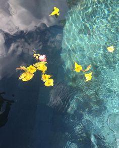 """Renee Leslie. SA Artist. on Instagram: """"Water water everywhere #turquoise#water#flowers#yellow"""" Water Water, Water Flowers, Turquoise Water, Yellow, Artist, Painting, Instagram, Gripe Water, Artists"""