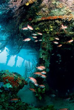 Interior view of the Lesleen wreck In St. Lucia, a 165-foot freighter that was deliberately sunk in 1986 to create an artificial reef.