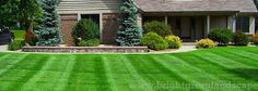 Lawn care experts can help improve your gardens. Not to mention, they can also provide you with effective services to make gardens more appealing. Green Landscape, Lawn Care, Bright Green, Stepping Stones, Improve Yourself, Home Improvement, Sidewalk, Gardens, Canning