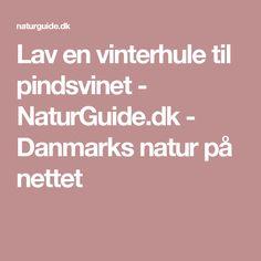 Lav en vinterhule til pindsvinet - NaturGuide.dk - Danmarks natur på nettet