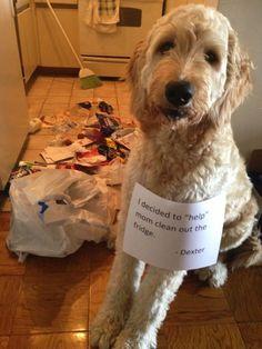 【写真】犬は人間をお手伝いするのが大好き