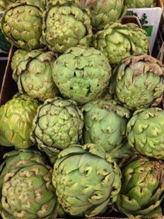 We have super-sized artichokes for your Thanksgiving celebration!
