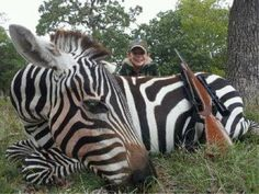 """Zebras Killed by Children in Canned Hunts Texas  Canned hunting operations, also referred to as """"shooting preserves"""" or """"game ranches,"""" are private trophy hunting facilities that offer their customers the opportunity to kill exotic and native animals that are trapped within enclosures. Some facilities even allow their clients to kill animals remotely via the Internet.  Sign Petition:  http://www.thepetitionsite.com/159/944/531/stop-hunting-endangered-species-in-texas/"""