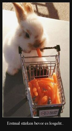 Cute little animals and other funny pictures Baby Animals Super Cute, Cute Baby Bunnies, Cute Baby Dogs, Cute Dogs And Puppies, Cute Little Animals, Cute Funny Animals, Cutest Bunnies, Baby Farm Animals, Tiny Puppies