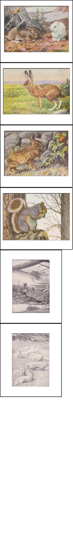 Pictures Of The Animals In Burgess Animal Book