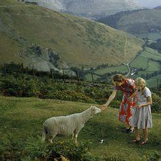 Denbighshire, Wales, 1953.
