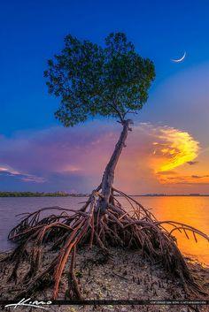 Mangrove Tree Under Crescent Moon at Lagoon | by Captain Kimo