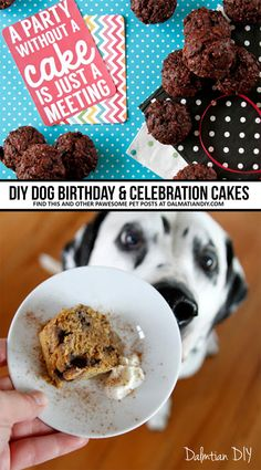 Preparing for a puppy party? How about baking and decorating a doggone great DIY dog cake? Check out our introduction to making homemade dog-friendly cakes and pupcake treats for birthdays, special occasions, or just because! Homemade Birthday Cakes, Homemade Cakes, Healthy Cake, Healthy Baking, Dog Friendly Cake, Homemade Frosting, Dog Cakes, Puppy Party, Edible Cake Toppers