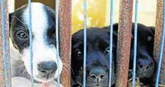 Stop the wave of animal cruelty in Cadiz!