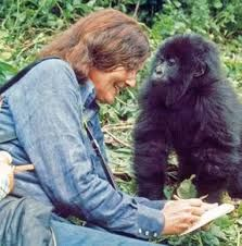 Dian Fossey with an infant gorilla, Poppy, in 1977